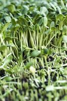 plant zwakke zonnebloem met de natuur foto