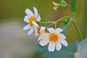 bloem uit Thailand foto