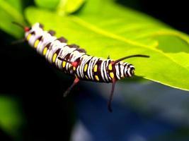 rups worm in de natuur foto