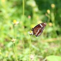 vlinder op zoek naar nectar op een bloem foto