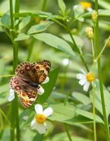vlinder boerderij foto
