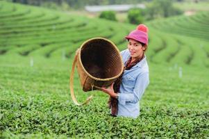 Azië mooie vrouw theebladeren plukken in plantage foto