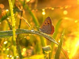 vlinder in de gouden stemming foto
