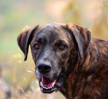kanarie hond foto