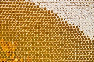 honingraat met verse honing en stuifmeel foto