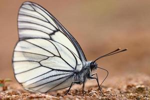 witte vlinders op zand foto