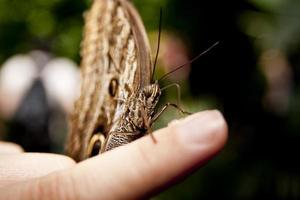 vlinder op de vinger foto