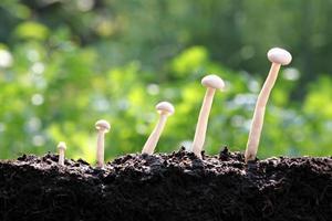 witte paddenstoelen laten groei zien. foto