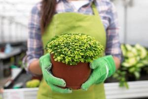 jonge vrouw tuinieren in kas. foto