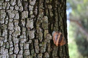 slak op stam