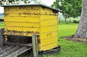 bijen en korf foto