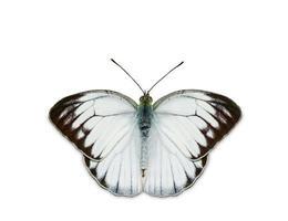 meeuw vlinder foto
