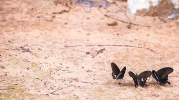 prachtige vlinder in de natuur foto