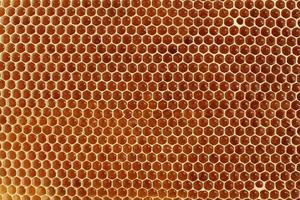 honeycell foto