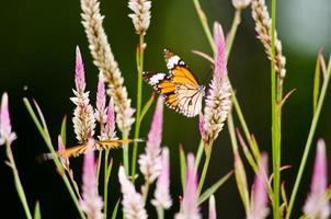 oranje vlinder op bloem foto
