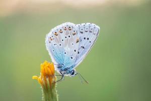 ragfijne gevleugelde vlinder in de avondzon foto