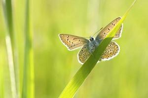 close-up van een vlinder foto