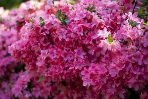 de bloemen komen in het park van Greenwich, Londen tot bloei foto