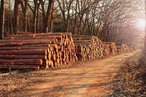 houten stammen foto