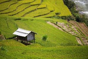 rijstboerderij in vietnam foto