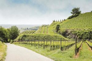 wijngaardlandschap in kaiserstuhl bischoffingen baden würemberg Duitsland foto