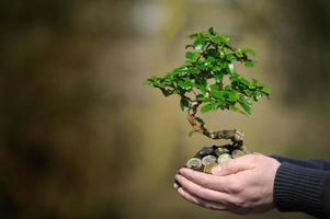 gevouwen handen vol geld met een boom die eruit ontspruit