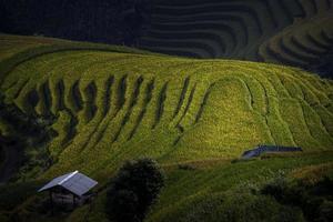 rijstterras in Vietnam foto