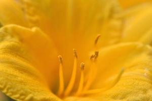 close-up van liliumbloem foto