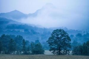 lied bergen