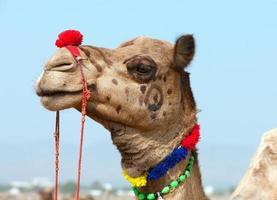 versierde kameel op de Pushkar-beurs. Rajasthan, India. foto
