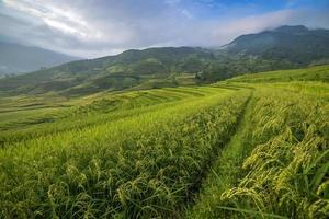 rijstterras in Vietnam