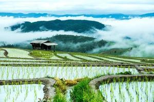 traditionele landbouw in cheing mai, noordelijk thailand.