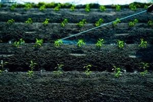 insecticiden spuiten foto