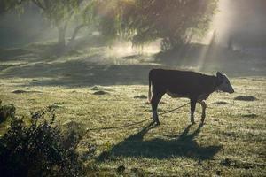 klassiek uitzicht platteland in uruguay foto