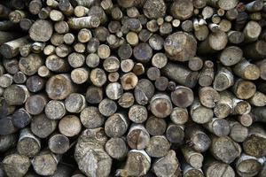 close up van houtstructuur achtergrond foto