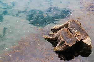 snijd boomwortels in het water foto