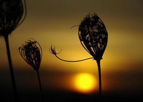 zonsopkomst foto