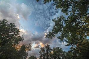 bomen in de avond foto