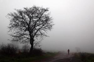 bomen en over de weg foto
