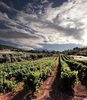 dramatische hemel op rijen wijnstokken foto