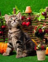 schattig katje foto