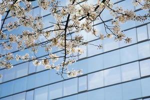 sites van japan foto