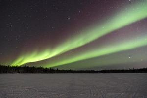 aurora over bomen in yellowknife, canada foto