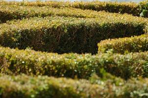 het tuinlabyrint foto