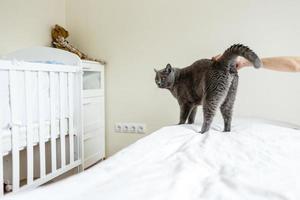 Russische blauwe kat foto