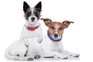 verliefde honden foto