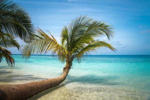 ongerept tropisch strand in de Maldiven foto