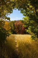 met gras begroeide weide met gebogen boomingang foto