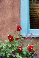 rode bloemen die een venster van new mexico sieren foto