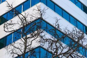 bomen en de moderne bouwmuur foto